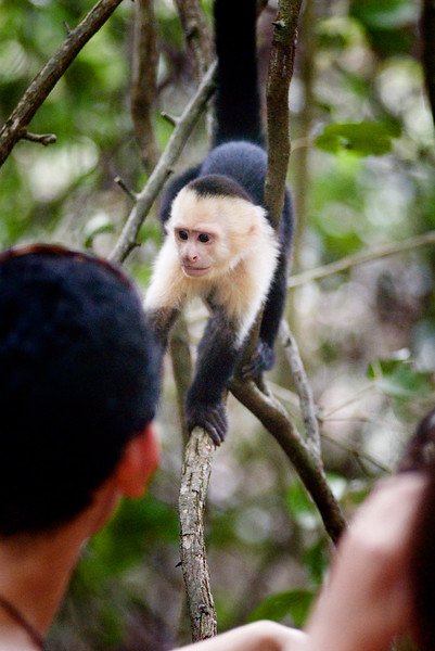 A tourist tries to touch a capuchin monkey