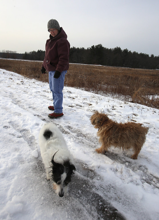 . Dogs and their owners walk around the cranberry bog (no longer farmed as of 2017) on Curve Street in Carlisle. Debbie Kritzler of Chelmsford, with her Irish Shortie Jack Russell terrier Willie, left, and border terrier Penny, right.(SUN/Julia Malakie)