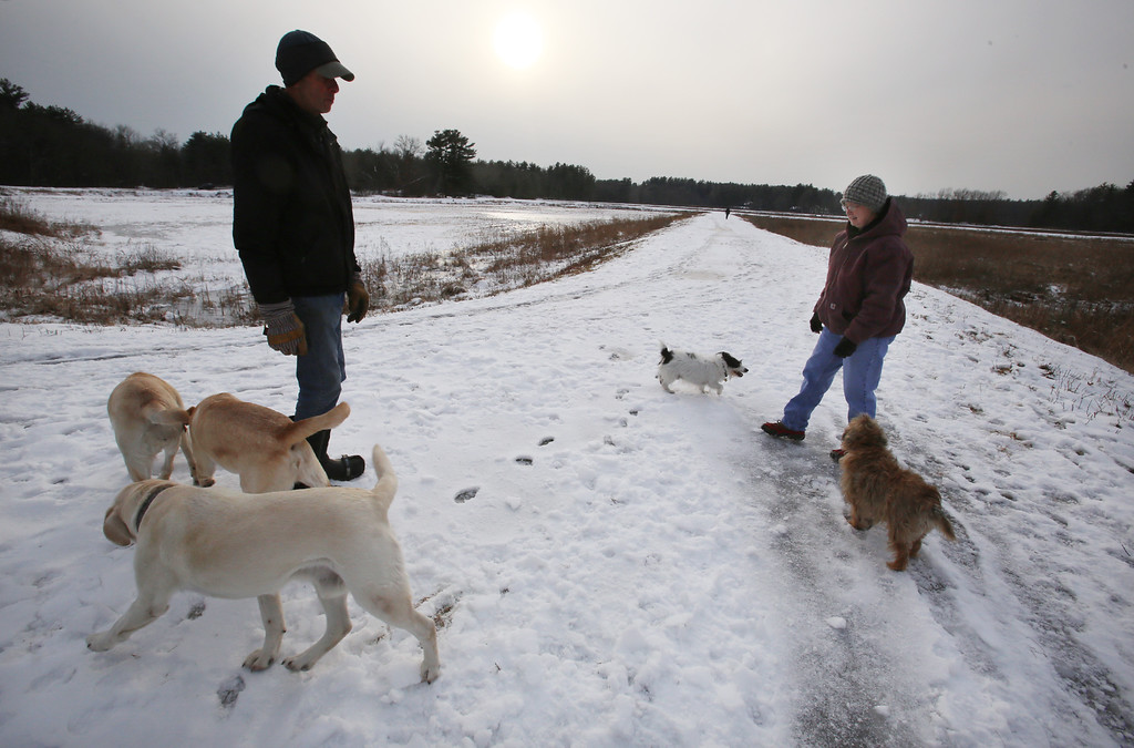 . Dogs and their owners walk around the cranberry bog (no longer farmed as of 2017) on Curve Street in Carlisle. It\'s a very popular dog-walking loop. Jay Patrick of Carlisle, left, and Debbie Kritzler of Chelmsford, right, with her Irish Shortie Jack Russell terrier Willie, and border terrier Penny, right. SUN/Julia Malakie)