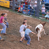 CALF SCRAMBLE. KIDS TRY TO BE THE FIRST TO TAKE THE RIBBON OF THE TOP OF THE CALVE'S TAIL.