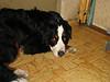 2009-08-30, IMG_6175 - Sherry.