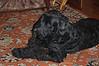 2004-04-20, DSC_0386 - Karmen.