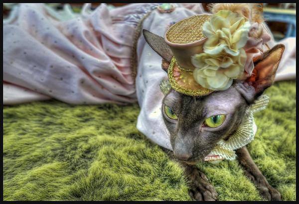 Cat  Fanciers Fashion Show, Alliance, Ohio
