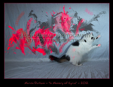 This work was inspired by my younger brother Cyrus Evinrude.  He recently passed away from an incurable disease, FIP.  His passing affected me greatly - he is truly missed by all who knew him.  He was a great cat.    I have started working with different mediums; this work is on a white canvas suspended next to the wall.