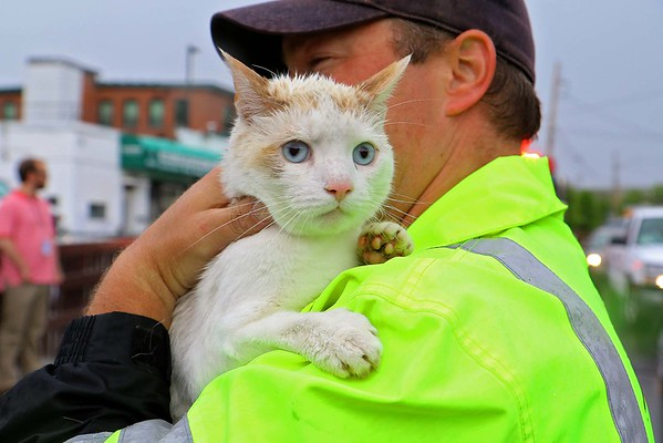 Cat rescued from Nashua River in Fitchburg
