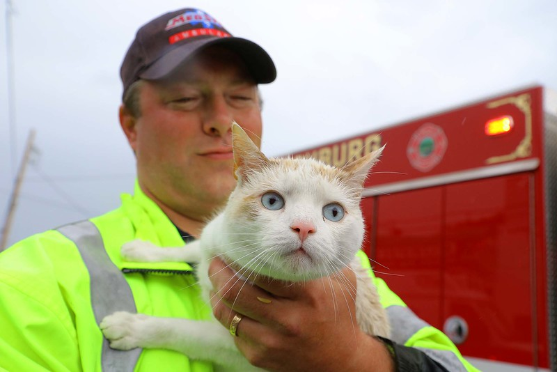 A mostly white cat was rescued from the Nashua River just off of River Street in Fitchburg on Thursday afternoon by Firefighter Tim O'Kane. He climbed down a ladder to get the cat and then climbed back up and handed it off to Paramedic Rob Elliott.  SENTINEL & ENTERPRISE/JOHN LOVE