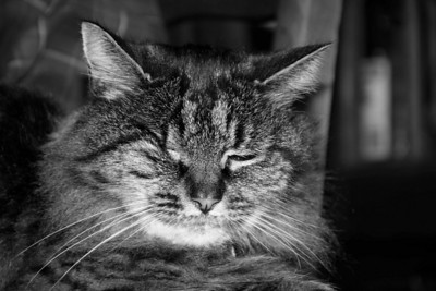 It's a bit of a challenge to get good shots of the cat these days, as she's lost her right eye. However it seems using flash to make her squint evens it up a bit. Poor Boo.