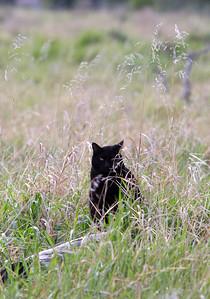 Stalking in Windermere