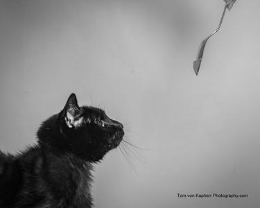 Tom von Kapherr Photography-5733