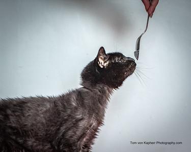 Tom von Kapherr Photography-5735