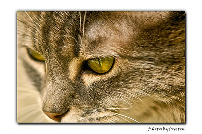 Intensity-- Our cat Lilly...