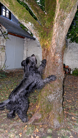 Yes, I will catch you, one day or another, you can trust me Tarzan....
