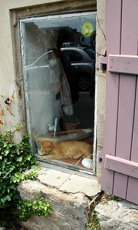the window and the cat is inside