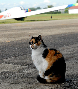 the three colors cat of the Strasbourg-Polygone airport