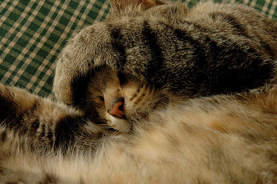 minou sleeping on a green sofa..