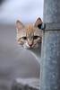 Lootuse tn kass nr 5