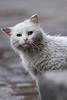 Lootuse tn kass nr 6