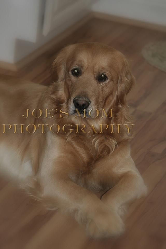Congenial dog