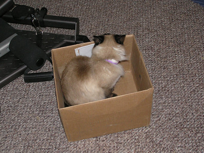 Cat in a box - 3