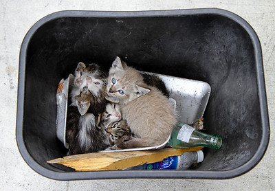 "Kittens in trash can at Nickelson. That's what you call a ""litter"" of kittens!"