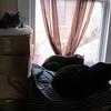 02-03-15 Brego 01 Spike, Topaz