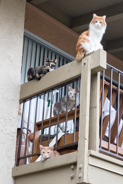 Balcony Cats
