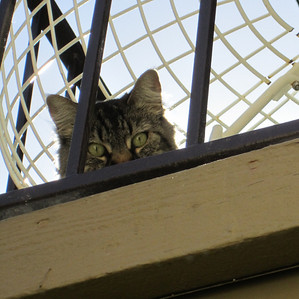 Another Balcony Cat 2011 nominee.