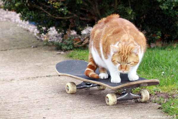 Cats 001