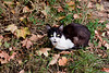 Cat lying on the grass