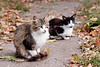 cats on road
