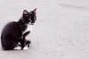 kitten