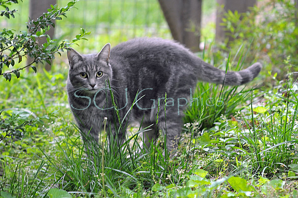 Cat1452