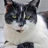 Cat3465