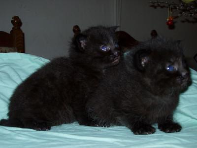 Katzen von Erna