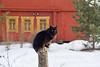 Black cat sitting on post