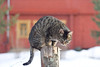 Grey tabby cat sitting on post