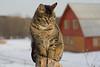 Grey tabby cat sitting on post