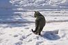 Strolling tabby cat