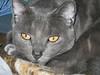 my handsome kitty Casey Jones