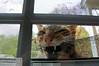 LET ME IN!!