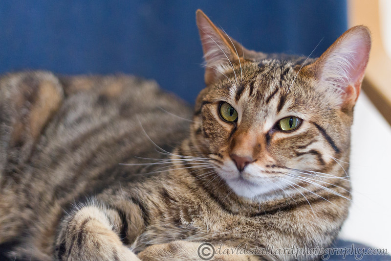 IMAGE: http://www.davidstallardphotography.com/Animals/Cats/i-5g8nHhC/0/L/50MM-f18-mk1-014-L.jpg