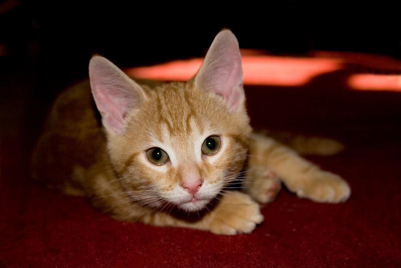 My kitten Rocky