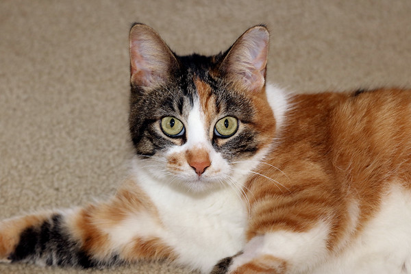 Lucy (Felis catus)