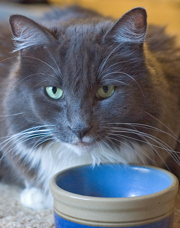 """""""Stormy at Her Bowl"""""""