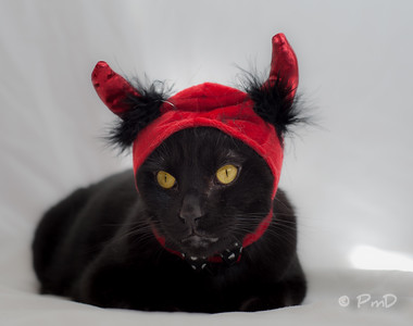 Little Black Devil