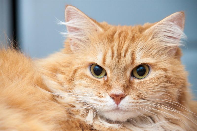 IMAGE: http://action-photo.smugmug.com/Animals/Cats/i-Cq9QQVd/0/L/IMG_1489-L.jpg