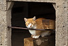 Barn Cat in Silo, Grundy County, Iowa
