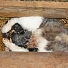 Brand New Kittens!