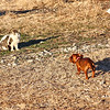 Doxie Standoff
