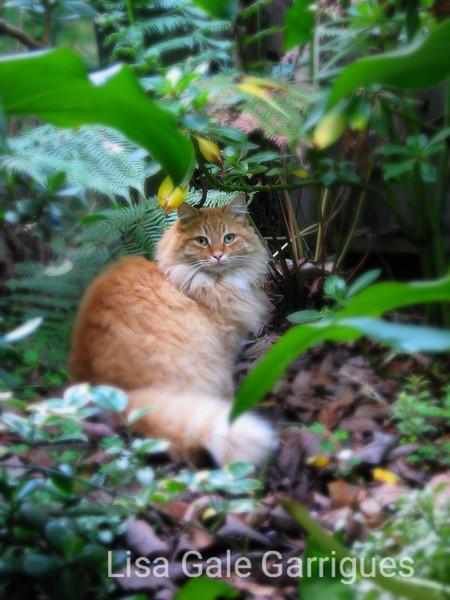 C'est Beau dans le Jardin  ( Beau in the Garden.)